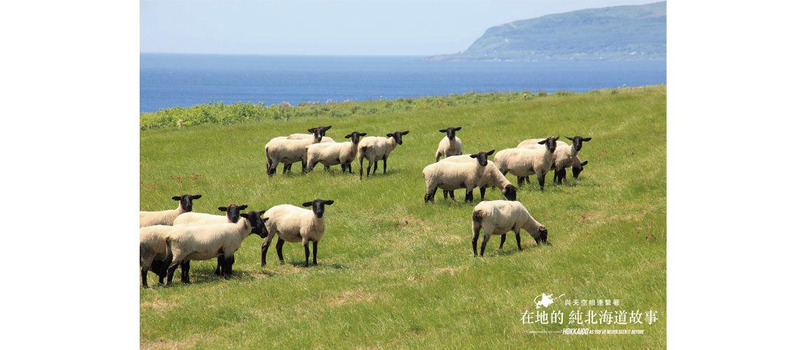 北海道綿羊牧場