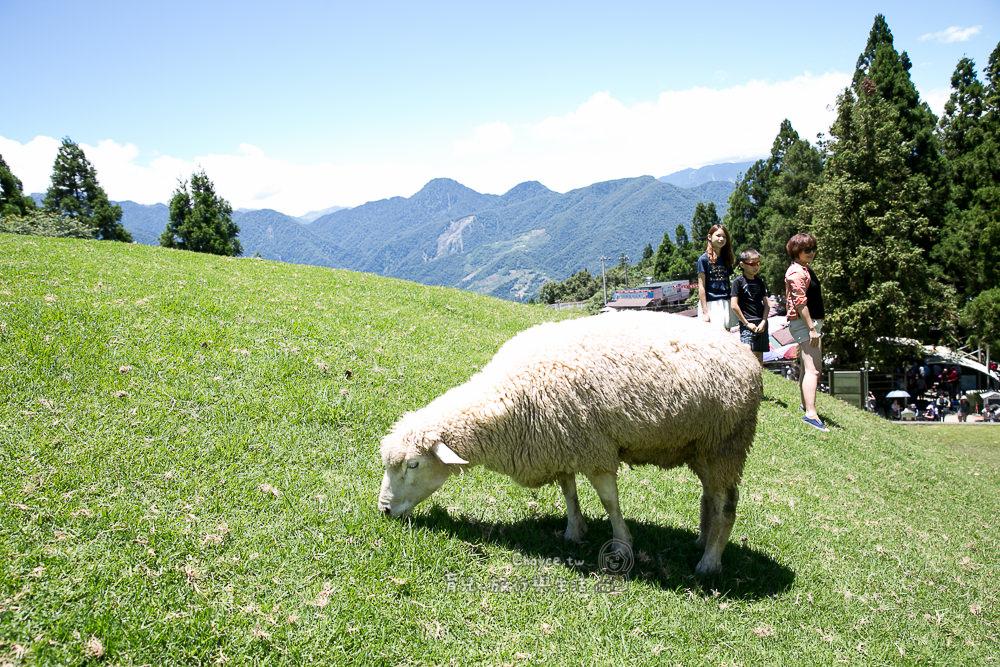 清境農場開心遊 普羅旺斯玫瑰莊園民宿四人房 三菱重工家用變頻空調 清爽好空氣初體驗