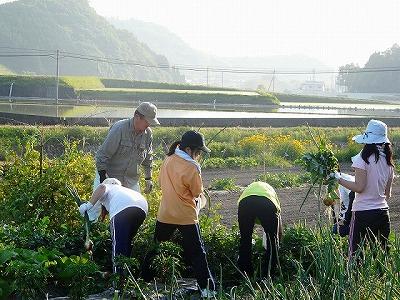 百年乃家ときえだ野菜収穫