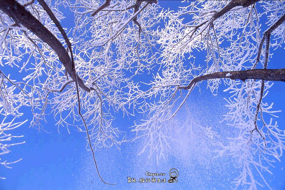 Rimed Tree 樹氷