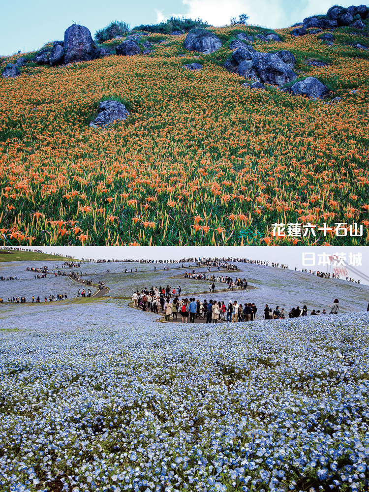銀獎-龔川榮-花蓮六十石山-玉里-東豐休閒農業區(花海比拼)對比圖