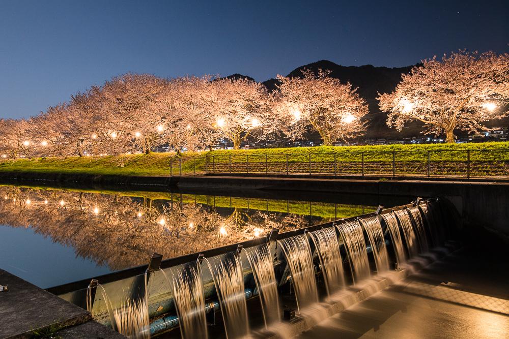 巨瀨川櫻花步道2