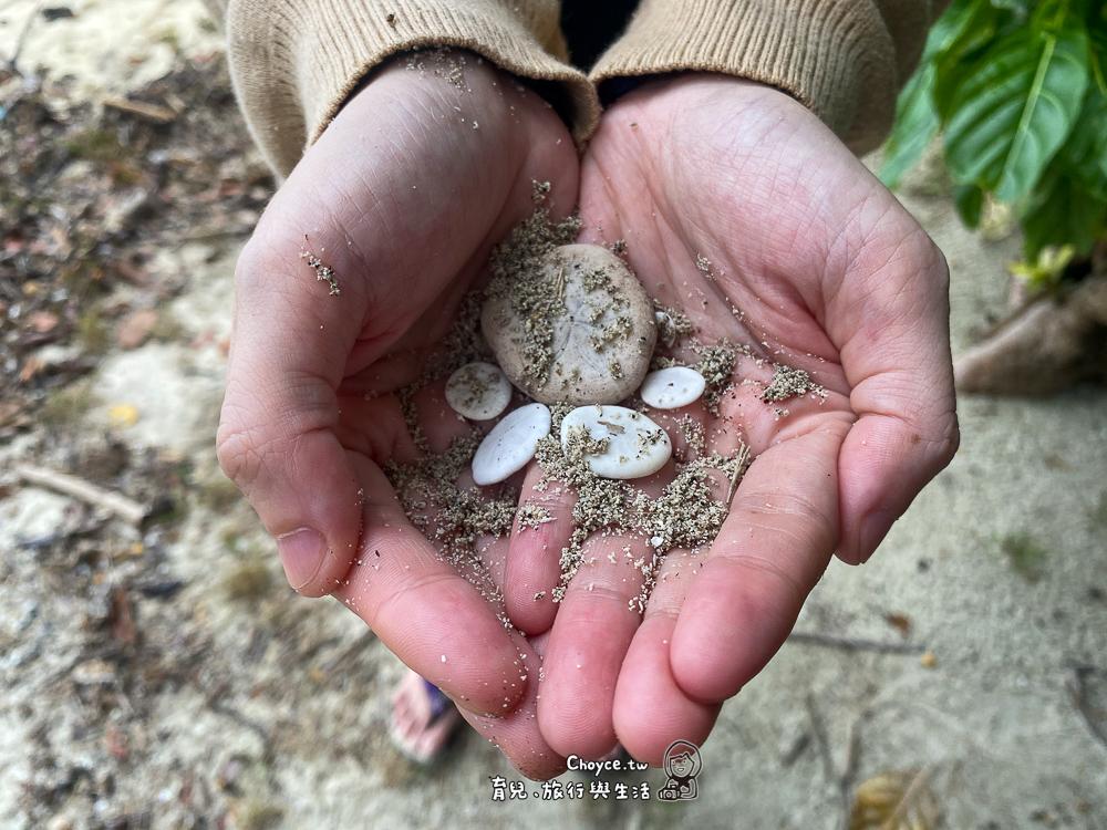 環保先行者 帛琉海洋與生態保育 水上活動必備清單