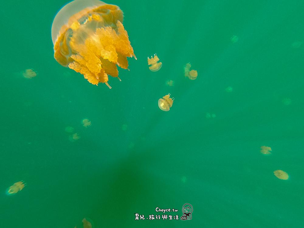 不只是浮潛 來點刺激 全世界只有帛琉有 水母湖 牛奶湖 鯊魚城 永生難忘