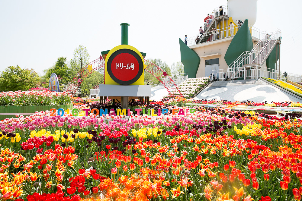 2016 tonami tulip fair 春季最盛大美麗 富山礫波鬱金香公園 堂堂登場