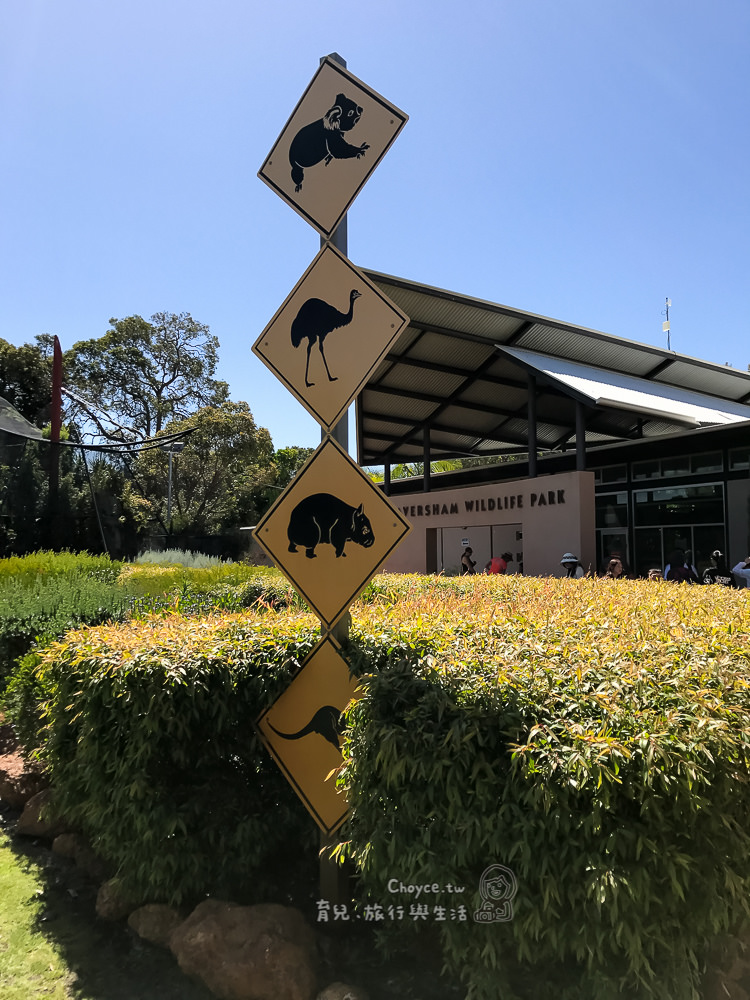 澳洲親子遊 袋鼠無尾熊零距離 實踐生態教育的第一步 Caversham野生動物園 Wombat koala kangaroo