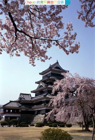 松本城 櫻花7