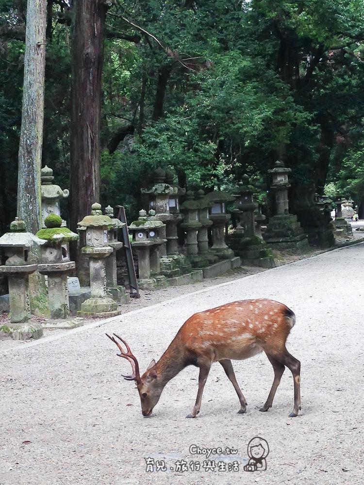 (日本關西親子遊) 廣域關西:京阪神奈超 詳細行程計劃大方公開