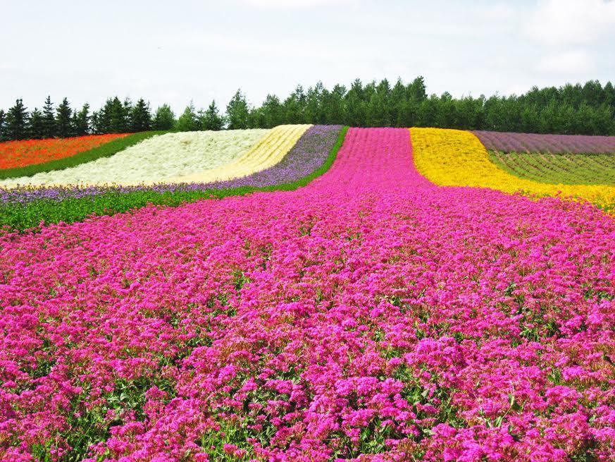 2015 暑假北海道富良野圖檔.jpg
