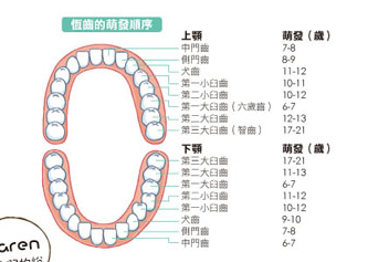 teeth03