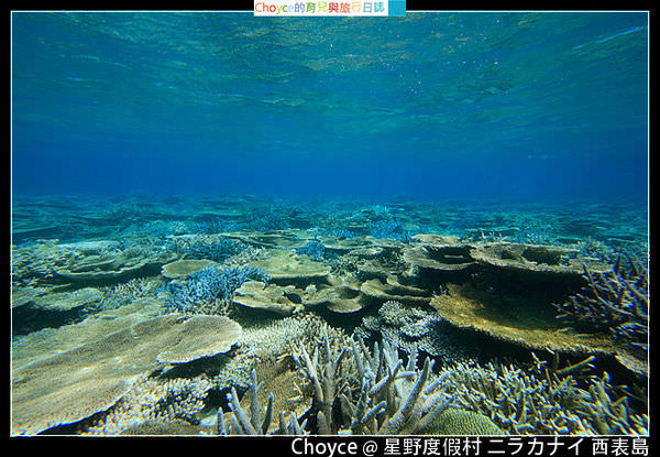 ボートで行くシュノーケル秘境奥西表_珊瑚礁.jpg