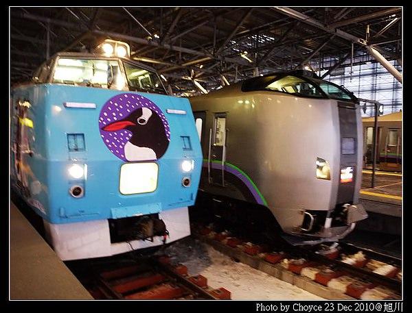 (日本北海道)旭川市 旭山動物園企鵝遊行 孩子做夢都要笑的一天!