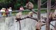 小鳥と小動物の森