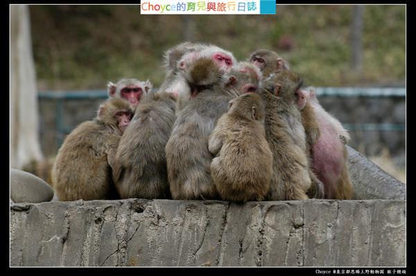 台東區 恩賜上野動物園 おしくらまんじゅう猴子饅頭可以吃嗎?!