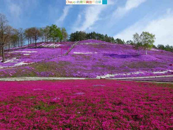 (日本北海道) 北海道道東風光無限,夏季限定美不勝收風景大集合