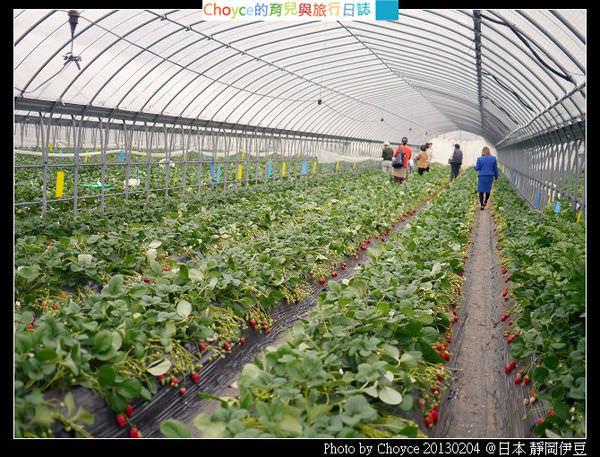 (日本靜岡縣) 伊豆之國市江間採草莓中心 賞櫻、採草莓正是時候 草莓果醬食譜大公開